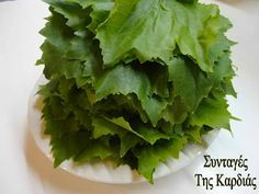 Cooking Classes, Cooking Tips, Greek Recipes, Lettuce, Preserves, Deserts, Herbs, Homemade, Canning