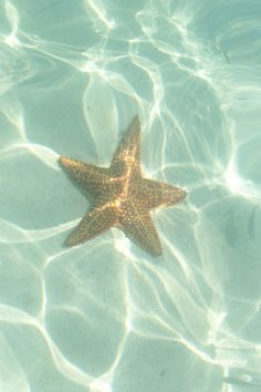 See starfish in the crystal-clear waters of the Turks & Caicos.