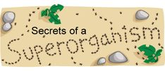 Ants are everywhere - they thrive in forests, fields, deserts, and cities all over earth. But what is the secret behind their success? Like humans, ants are social.Also in: Español Ant Colony, What Is The Secret, Biologist, Best Sites, Ants, Teacher, Gardening, Activities, Professor