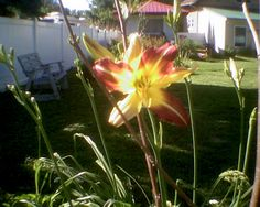 Lilly 6-2014