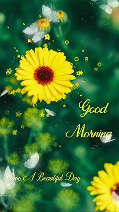 Good Morning Images Flowers, Cute Good Morning Quotes, Good Morning Beautiful Quotes, Happy Morning Quotes, Good Morning Images Hd, Morning Pictures, Best Good Morning Messages, Good Day Wishes, Good Morning Video