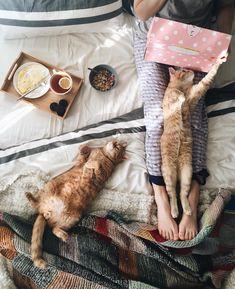 Кот + ноги + девушка + одеяло + кровать + ноутбук + кофе + уют + комната
