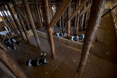 An inside view of the Noah's Ark Replica.