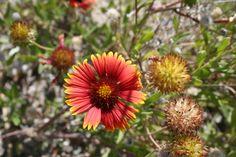 Wild Desert flowers Palm Springs California