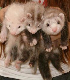 Awee baby fuzzies :)