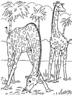 Wild Animal Coloring Pages Best Coloring Pages For Kids Zoo Animal Coloring Pages Farm Animal Coloring Pages Zoo Coloring Pages