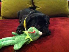 I killed Kermit