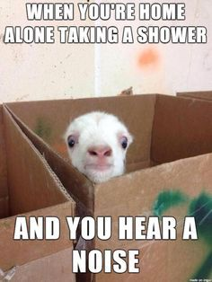funny animals<< has happen to me a few time and its always in the kitchen too so weird o. O