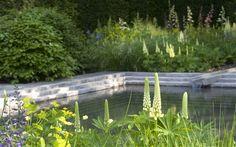 the laurent-perrier garden at chelsea