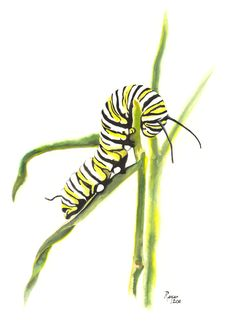 ORIGINAL Watercolor Insect Painting / Monarch Caterpillar