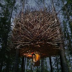 'The Bird's Nest' tree hotel with retractable staircase