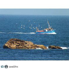 #sharemysea #Repost @axel2frx  #bretagne #bretagnetourisme #jaimelabretagne #myfinistere #seaside #sharemysea #ocean #mer #sailing #fansdebretagne #seagull #seagulls #oiseau #mouette #goeland #bateaux #peche #fishing #fisherman #birds #bird #boat #boats #ShareMySea