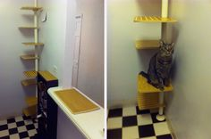 My Cat From Hell Makeover Olive and Pepper Klimboom voor Meneer Poes #Pintratuin