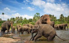 Le Sri Lanka vous fait de l'oeil pour votre prochain voyage en famille avec les enfants ? Voici quelques conseils pour savoir si vous êtes prêts pour partir au Sri Lanka en famille avec les enfants, si c'est le bon moment pour vous et vos petits : le décalage horaire, le budget à prévoir, la durée du vol, l'équipement nécessaire à mettre dans ses valises. Bref, tout ce qui vous fera vous dire