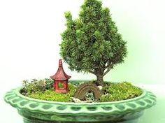 chinese terrarium - Google zoeken