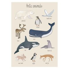 Arctic Animals Poster by Sebra is perfect for unique kids bedrooms! Country Bedroom Design, Artic Animals, Sleigh Beds, Animal Posters, Nursery Prints, Kids Decor, Boy Room, Kids Bedroom, Kids Rooms
