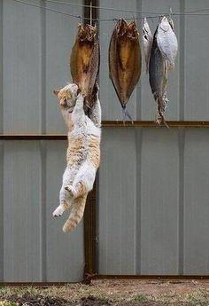 I gatti sono cacciatori, ecco cosa succede a lasciare dei pesci all'aperto