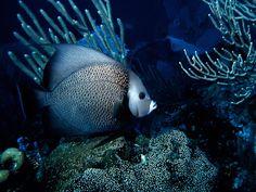 http://www.modernhdwallpaper.com/wp-content/uploads/2012/01/Good-wallpaper-ocean-life-05.jpg