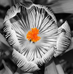 Black and White with a Splash of Colour