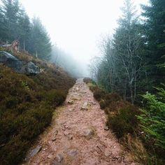 #Nebel #schwarzwald #Nationalpark #Wetter #nationalparkschwarzwald #fog #weg #wald #waldweg #natur #frühling #wandern #hiking #naturpark #landschaft #landscape #wild #sonyalpha7 #zeiss #zeiss1635