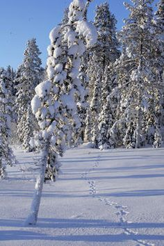 Meanwhile in Finland: -35* C in Muonio during the night 18.-19.1.2013