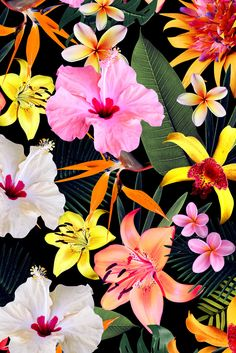 Pattern Tropical Floral