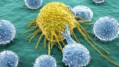 Das Krebs Dilemma - Deswegen erkranken so viele Menschen an dieser Krankheit...