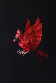 paper cardinal