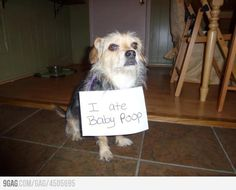 ate baby poo