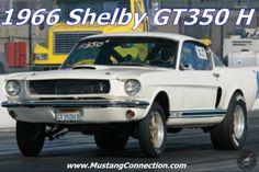 1966 Shelby GT 350 Hertz Drag Racer Owner Interview with Randy Gillis