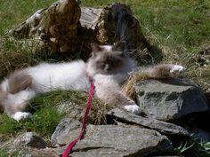 King Smokey sunbathing!