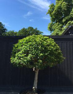 Kwekerij De Zanderik - Bomen, heesters en vaste planten.