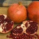 Kashmir Pomegranate Tree (Standard)