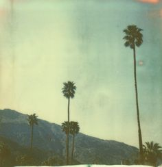 More palm trees. :) <3    palm springs (seven) by girlhula, via Flickr