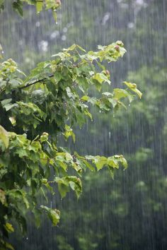 Rainy Mood, Rainy Days, These Broken Stars, Rain Sounds For Sleeping, Smell Of Rain, I Love Rain, Kissing In The Rain, Rain Photography, White Photography