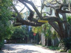 """""""The Old Point""""...Beaufort, SC this was a real hanging tree"""