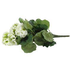 White & Green Geranium Bush