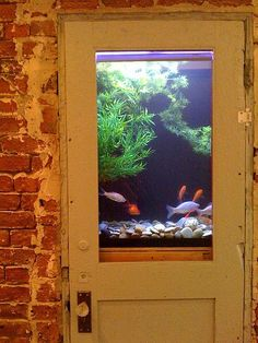Glowing aquarium in a stylish, rustic display showcasing a panel wooden door.