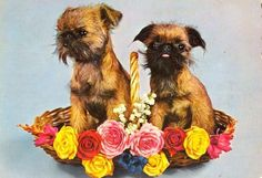 Old Brussels Griffon in Basket Postcard from Paris for Dog Rescue   eBay