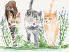 walking-cats.jpeg 720×540 pixels