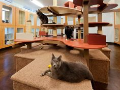 """Animal Arts > Pet Resorts > Olde Towne Pet Resort Dulles, VA (This is where I go """"on vacation"""".) Link to the firm that designed the pet resort and cattery. Cat Jungle Gym, Cat Habitat, Cat Hotel, Pet Boarding, Animal Boarding, Cat Activity, Pet Resort, Cat Condo, Cat Room"""