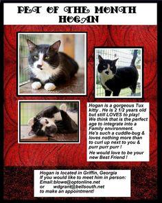 Asheville Cat Adoption