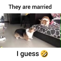 Amazing Ideas and Photography. thats my parents Funny Animal Memes, Funny Animal Videos, Dog Memes, Cute Funny Animals, Funny Animal Pictures, Cute Baby Animals, Funny Cute, Funny Dogs, Cute Cats