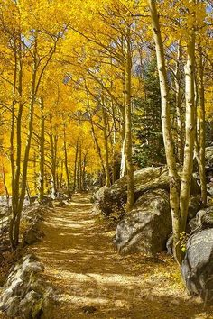 Aspen Path (Rocky Mountain National Park, Colorado) by Rob Greebon