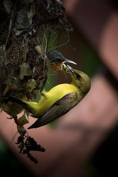 A bird feeding its young one.