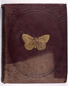 Old Books & Things.., Natural History of Insects 1842