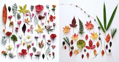 In her series of botanical arrangements, Ja Soon Kim neatly organizes colorful vegetation into beautifully balanced compositions.