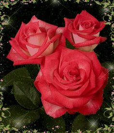 Blooming Red Roses red flowers animated rose gif blossom bloom red rose