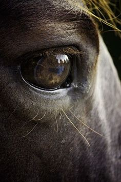by Ken Gehring - Animals Horses ( reflection, ken gehring photography, arkansas photographer, horse, eyes ) by shari All The Pretty Horses, Beautiful Horses, Beautiful Eyes, Animals Beautiful, Horse Photos, Horse Pictures, Equine Photography, Animal Photography, Western Photography