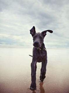 Need a dog sitter soon? Go to http://rover.com/fz25pindane to redeem your  off coupon!  Please Share ♥♥♥
